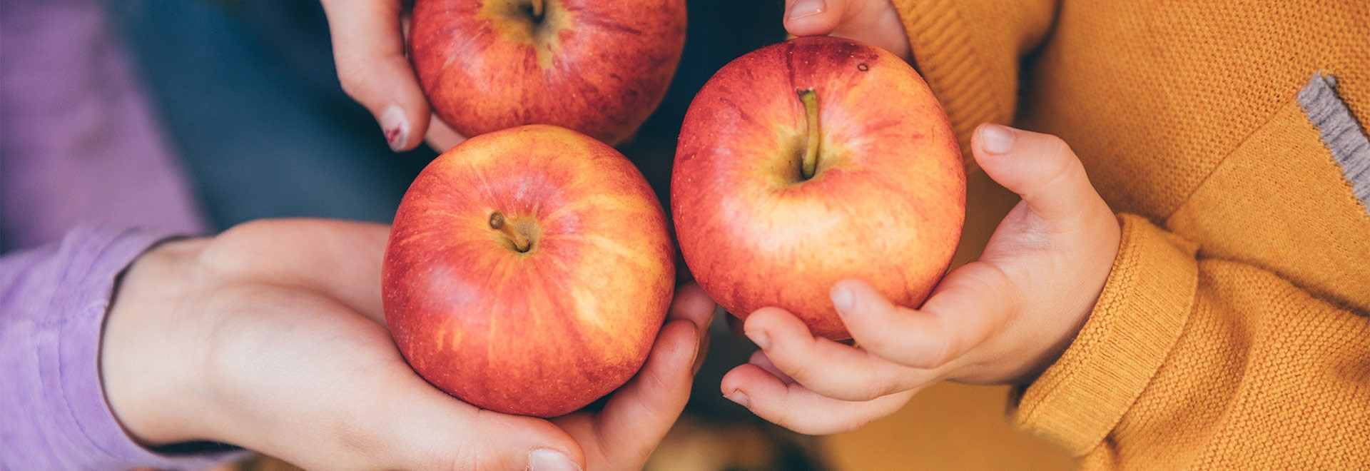 Sélection d'outils pour préparer des mets à base de pommes