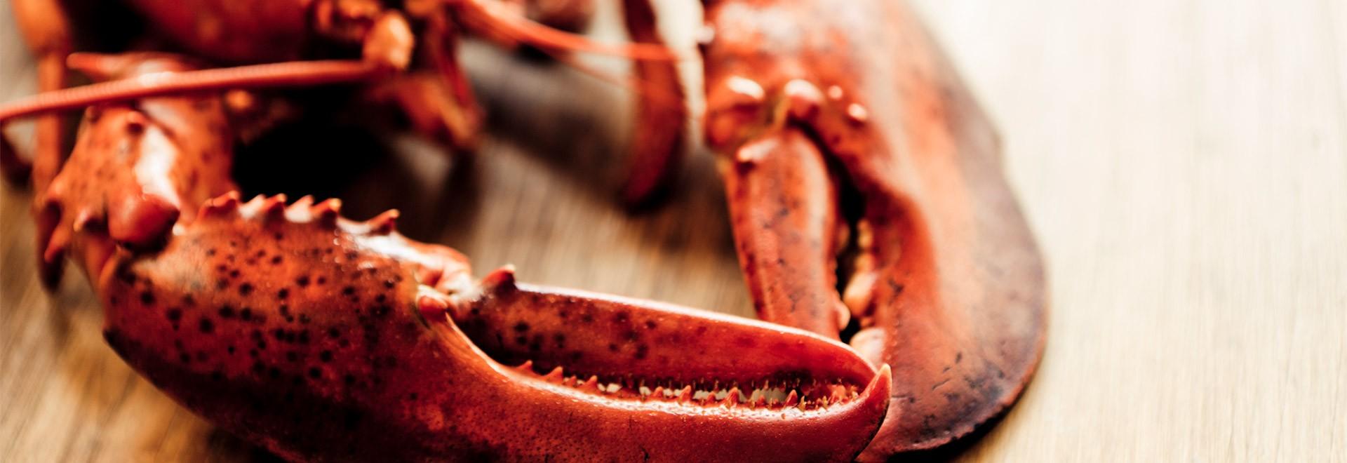 Conseils pour la sélection, la cuisson et la consommation de homard